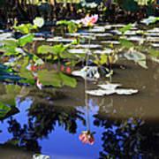 Lotus Reflection Art Print