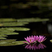 Lotus Reflections Art Print