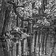 Louisiana Bayou - Bw Art Print