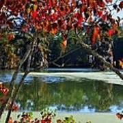 Louisiana Fall Art Print