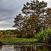 Louisiana Landscape Art Print