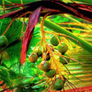 Loulu Palm Art Print