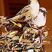 Love Birds II Art Print