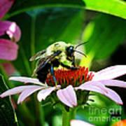 Love Bug Art Print