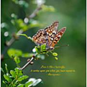 Love Is Like A Butterfly Art Print
