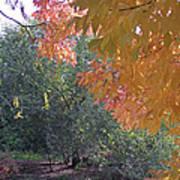 Lovely Autumn Colors Art Print