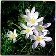 Lovely flowers in spring Art Print