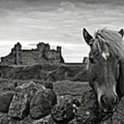 Lovely Horse And Tantallon Castle Art Print