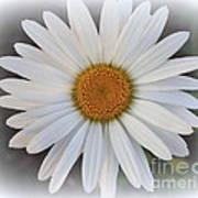 Lovely In White - Daisy Art Print