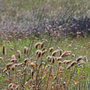 Lovely Layers Of Grass Art Print