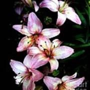 Lovely Lilies Art Print