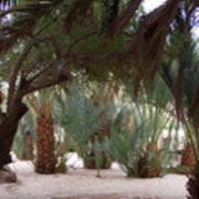 Lovely Oase Desert Camp Sinai Egypt Art Print
