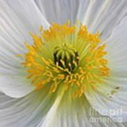 Lovely White Flower Square Art Print