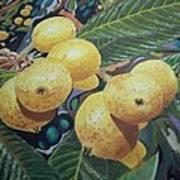 Lowquats 2 Art Print