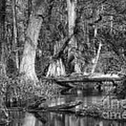 Loxahatchee Black And White Art Print