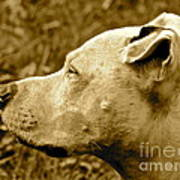 Loyalty And Strength Art Print by Q's House of Art ArtandFinePhotography