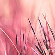 Luminis - S09c - Pink Art Print