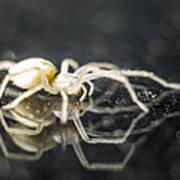 Luminous Spider Art Print