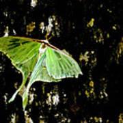 Luna Moth On Tree Art Print