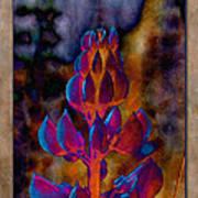 Lupin Glow Art Print