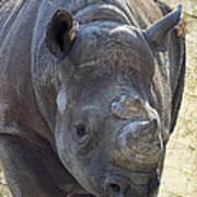 Lurching Rhino Art Print