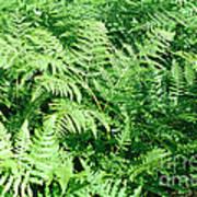 Lush Green Fern Art Print