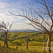 Lush Land Leafless Trees 2 Art Print