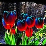 Lustrous Tulips Art Print