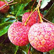 Lychee Fruit  Art Print