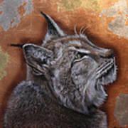Lynx Face Art Print