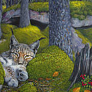 Lynx In The Sun Art Print