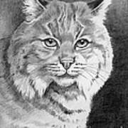 Lynx Art Print by Suzanne Schaefer