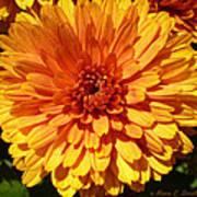 M Bright Orange Flowers Collection No. Bof7 Art Print