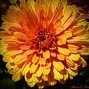 M Bright Orange Flowers Collection No. Bof8 Art Print by Monica C Stovall