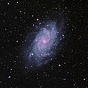 M33--the Triangulum Galaxy Art Print