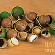 Macadamia Nuts Art Print