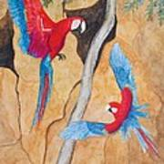 Macaw Claylick Art Print