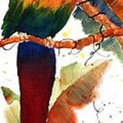 Macaw Feathers Art Print