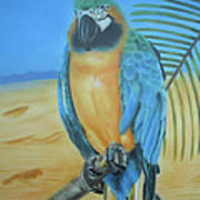 Macaw On A Limb Art Print