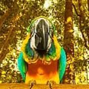 Macaw Parrot Art Print