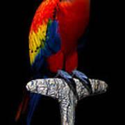 Macaw... Art Print