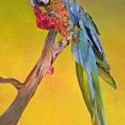Macaw's Dream Art Print