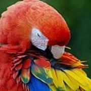 Macaws Of Color26 Art Print