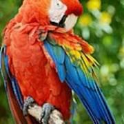 Macaws Of Color31 Art Print