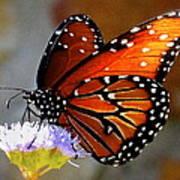 Macro Butterfly Art Print