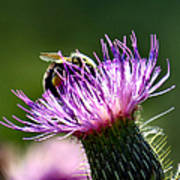 Macro Micro Bee Art Print