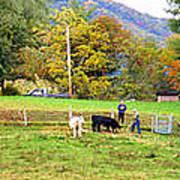 Mac's Farm In Balsam Grove 2 Art Print