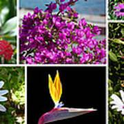 Madeiran Flower Collage Art Print