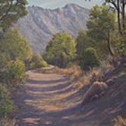Madera Canyon Art Print