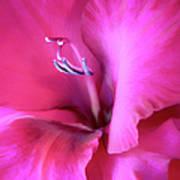Magenta Splendor Gladiola Flower Art Print by Jennie Marie Schell